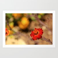 flower from my trip to israel Art Print