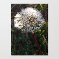 Decorated Dandelion Canvas Print