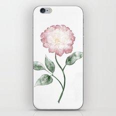 Pfingstrose   Peony iPhone & iPod Skin