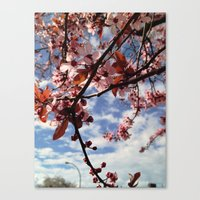 Cherry Blossoms In Sprin… Canvas Print