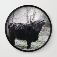 Black highland cow covered in frost on a winters morning. Norfolk, UK. Wall Clock