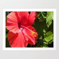 Hibiscus Flower Art Print