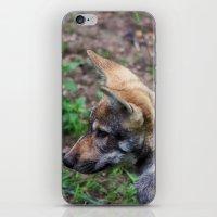 Canis Lupus Lupus iPhone & iPod Skin