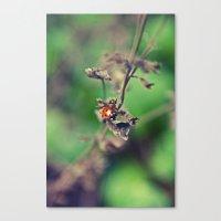 The Summer Bug Canvas Print