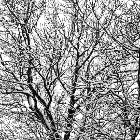 one winterday II Art Print