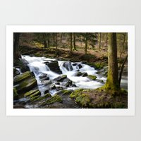 Trees and Water Art Print
