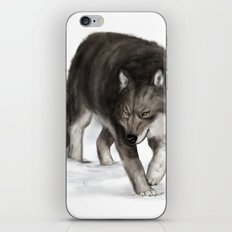 Arctic wolf iPhone & iPod Skin