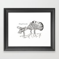 Clitocybe Brumalis // Hand Drawn Fungi Series Framed Art Print