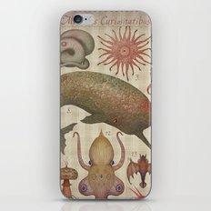 Marine Curiosities I iPhone & iPod Skin