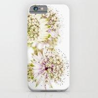 Astrantia major iPhone 6 Slim Case