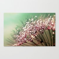 Dandelion Sunrise Canvas Print