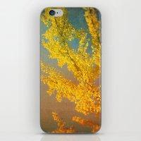 Yellow Ginkgo Tree in Autumn iPhone & iPod Skin