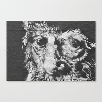 Eyes Of Wisdom Canvas Print