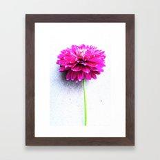 dahlie pink Framed Art Print