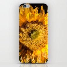 sunkissed sunflower iPhone & iPod Skin