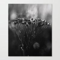 Cold Still Life Canvas Print