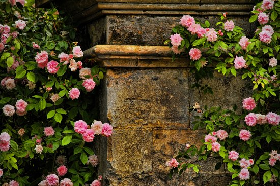 Stones and Roses Art Print