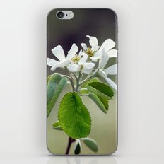Malus flowers - spring 30 iPhone & iPod Skin
