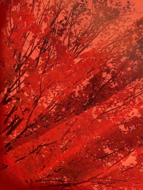 Red Rays of Autum Art Print