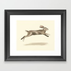 Wild Rabbit Framed Art Print