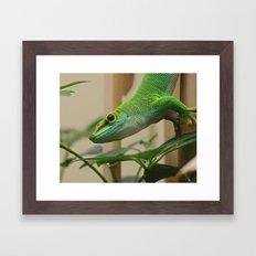 Madagascar Giant Day Gecko Framed Art Print