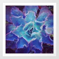 Blue Echeveria Art Print