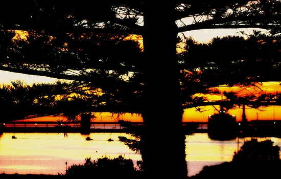 Through the Norfolk Pines Art Print