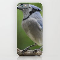 A Northern Blue Jay iPhone 6 Slim Case