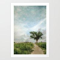 Windswept Tree on Barrier Island North Carolina Art Print