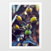 Exotic Fruits - Botanica… Art Print