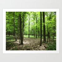 Woodland Secrets - Sprin… Art Print