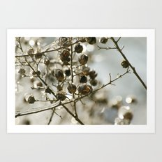 Winter's Silver Jewel Art Print