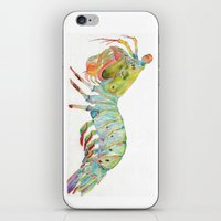 Peacock Mantis Shrimp iPhone & iPod Skin