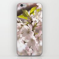 Tender Blossoms iPhone & iPod Skin