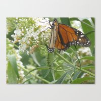 Canvas Print featuring Monarch by Joy Reyes