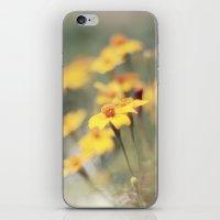 Orange Zest iPhone & iPod Skin