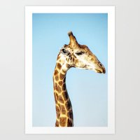 Portrait Of A Giraffe Art Print