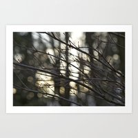 Twigs at Dusk Art Print
