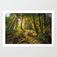 Redwood Regional Art Print