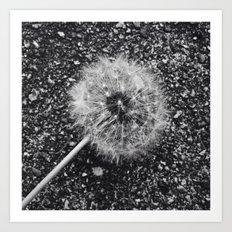 Dandelion in black and white Art Print