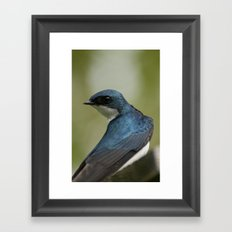 Tree Swallow - Ottawa, ON Framed Art Print