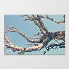 Driftwood Ladder Canvas Print