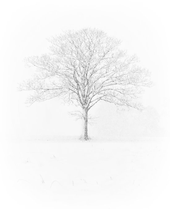 Tree in the Snow Art Print