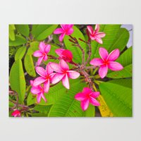 Canvas Print featuring Tropics by KeCuddihee
