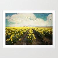 fields of daffodils Art Print