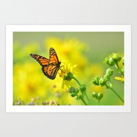 Oh pretty monarch Art Print