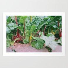 Rainbow Chard Art Print