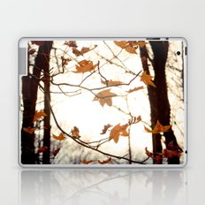Sunlight Through the Branches Laptop & iPad Skin