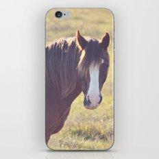 Chesnut Horse iPhone & iPod Skin