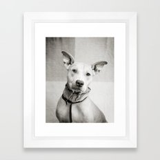 Shelter Dog Portrait Framed Art Print